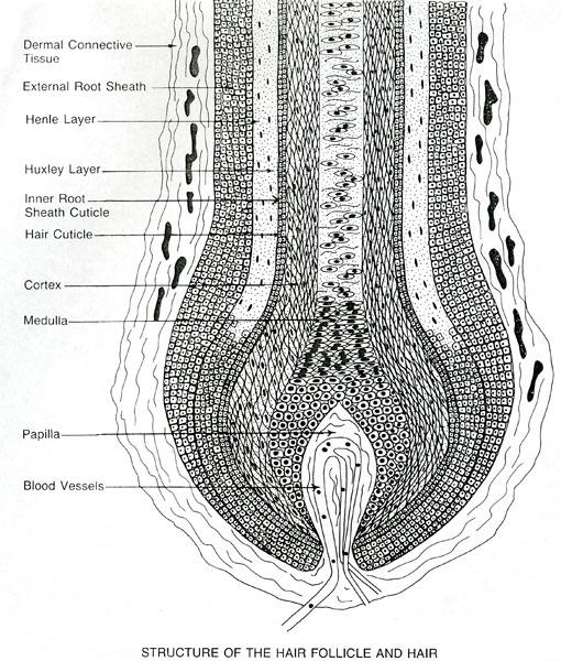 Hair Skin Nails    On Pinterest